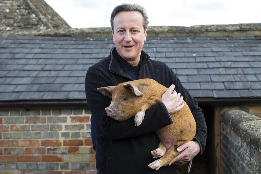 david-cameron-pig-piggate-rumors-oxford-piers-gaveston