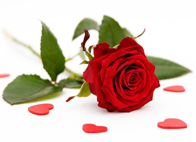 Beautiful-Red-Roses-roses-34610974-690-501