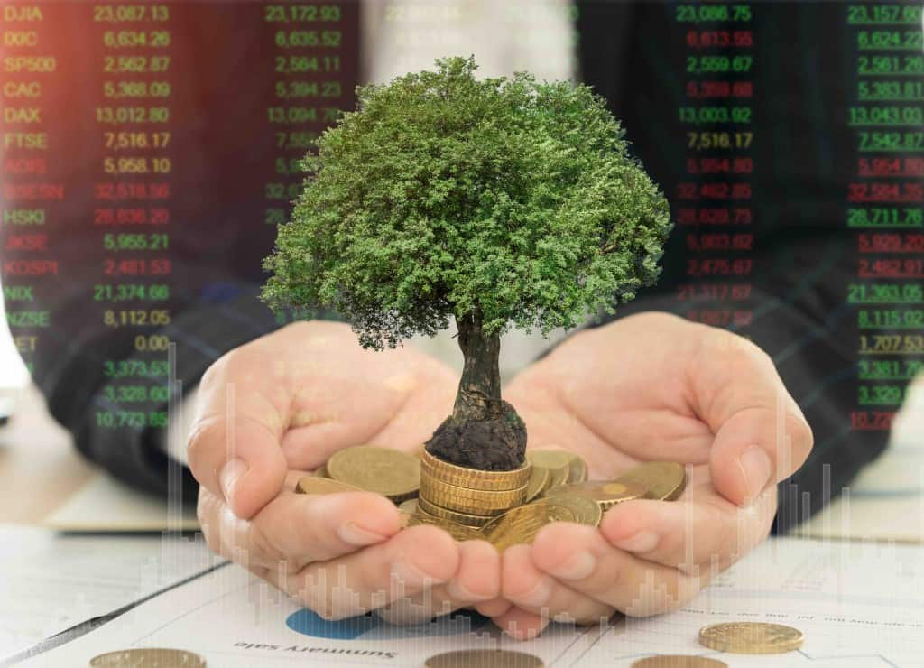 business and investment growth concept. tree grow up on money coins stack in hand of investor with index stock market. investment concept.